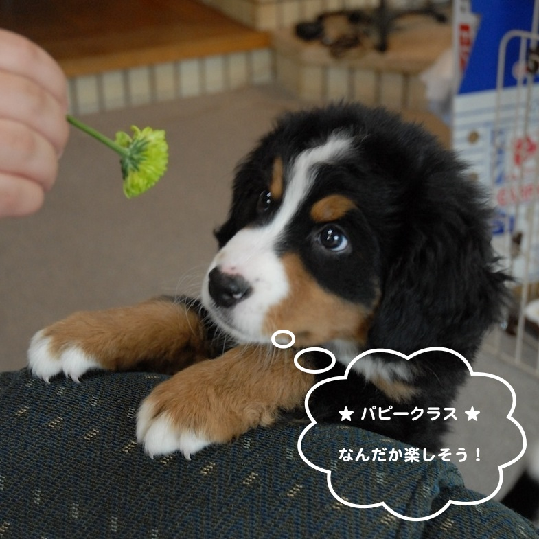 犬 しつけ教室 吹田