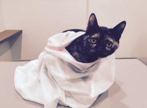 猫 避妊手術 吹田