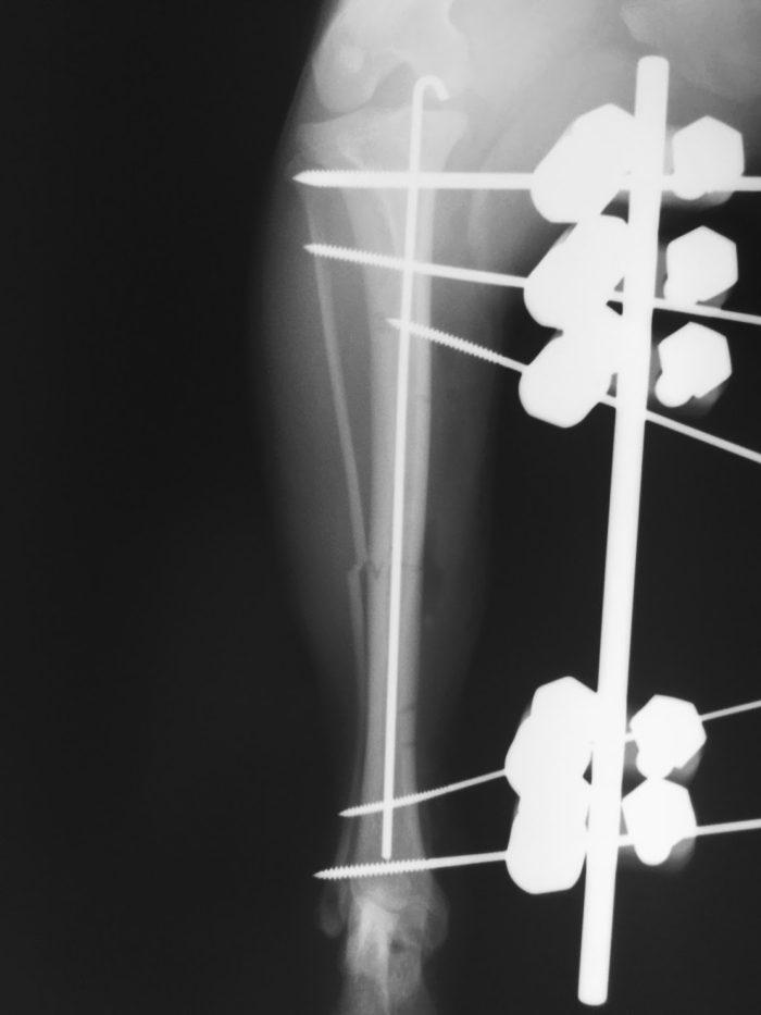 犬 骨折 手術