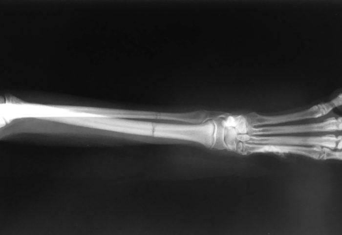 犬 骨折 整形 手術