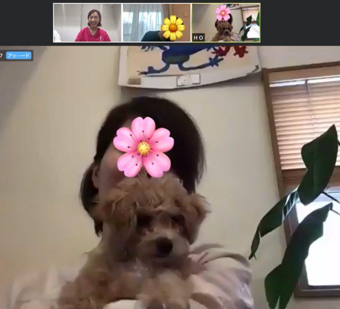 犬 しつけ教室 動物病院