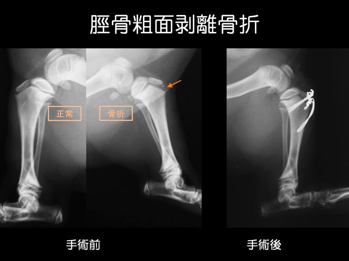 動物 骨折 吹田 手術