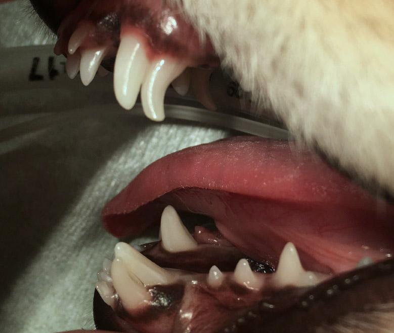 乳歯 犬 歯科 吹田