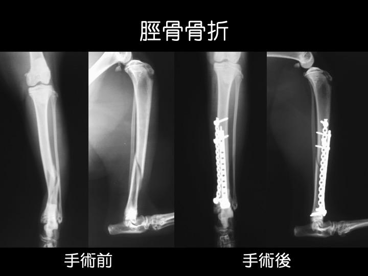 動物病院 骨折 犬 猫 手術 吹田