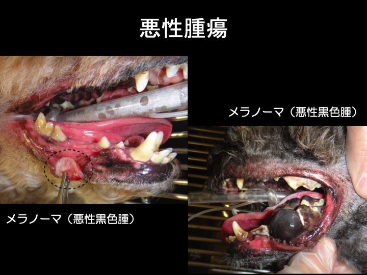 犬 口 腫瘍 悪性