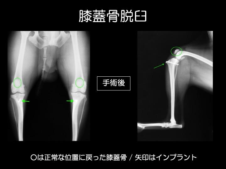 犬 膝 脱臼 手術 整形 吹田